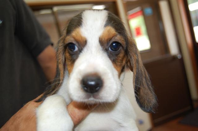 ミックス犬の子犬No.200806131