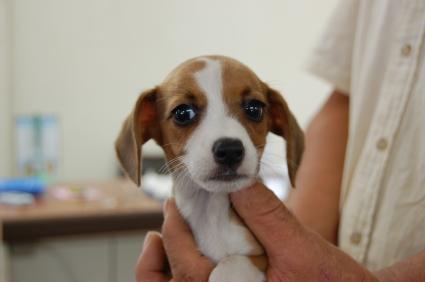 ミックス犬の子犬No.200806301