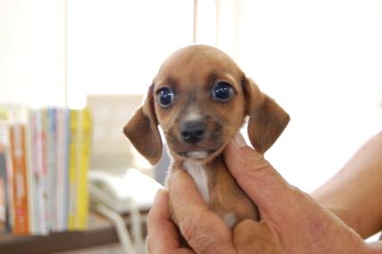 ミックス犬の子犬No.200806302