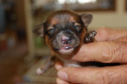 ミックス犬の子犬No.200808091