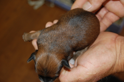 ミックス犬の子犬No.200808091-2