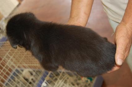 ミックス犬の子犬3-2