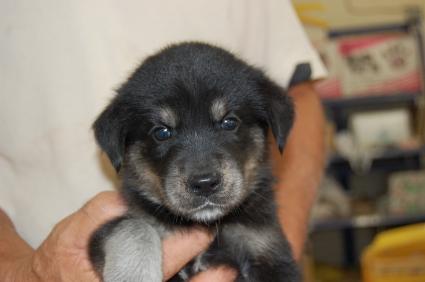 ミックス犬の子犬4