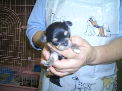 ミックス犬の子犬No.200809252