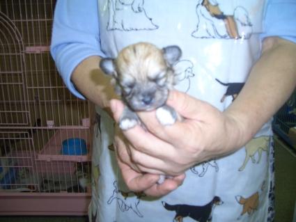 ミックス犬の子犬No.200809253