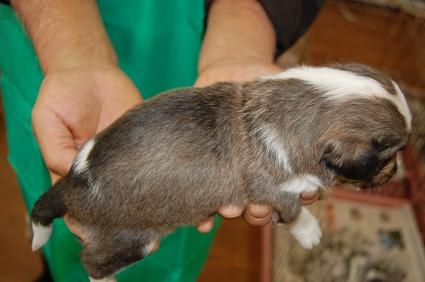 ミックス犬の子犬No.200811092-2