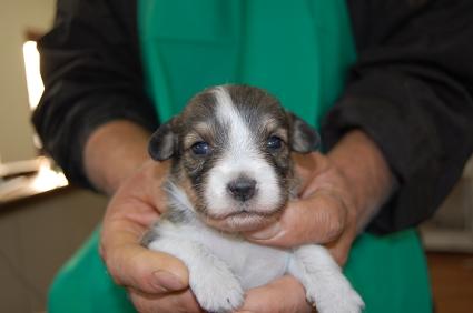 ミックス犬の子犬No.200811093