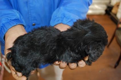 ミックス犬の子犬No.200810261-2