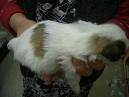 ミックス犬の子犬No.200902011-2