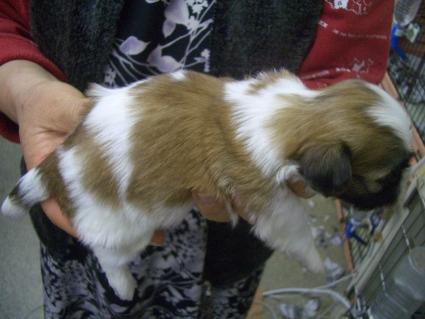 ミックス犬の子犬No.200902012-2