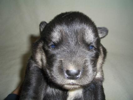 ミックス犬の子犬No.200904166