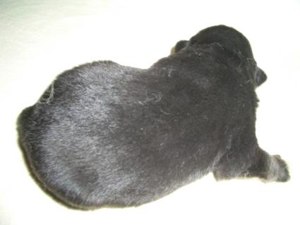 ミックス犬の子犬No.200904164-2