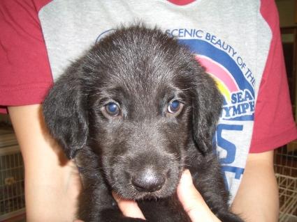 ミックス子犬の写真