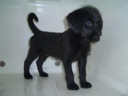 ミックス犬の子犬No.200905131-2