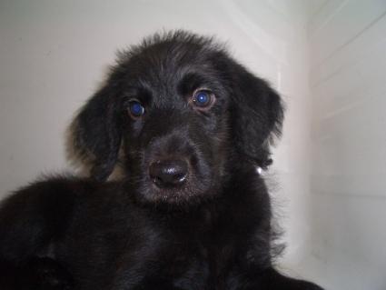 ミックス犬の子犬No.200905131
