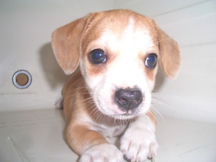 ミックス犬の子犬No.200906281