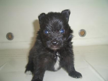 ミックス犬の子犬No.200908071