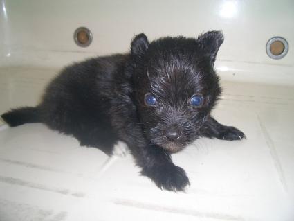 ミックス犬の子犬No.200908071-2
