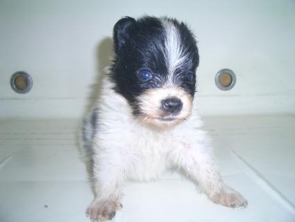 ミックス犬の子犬No.200908072