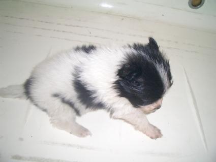 ミックス犬の子犬No.200908072-2