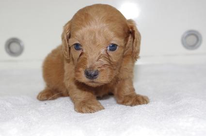 ミックス犬の子犬No.200911201