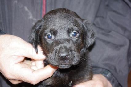 ミックス犬の子犬No.200912141