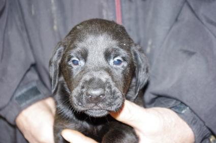 ミックス犬の子犬No.200912142