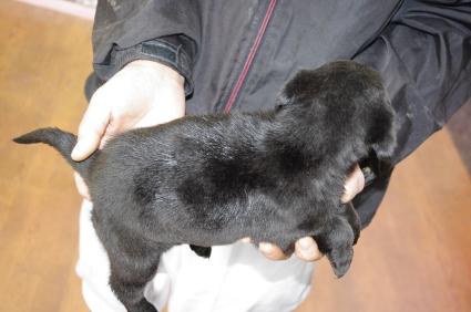 ミックス犬の子犬No.200912143-2