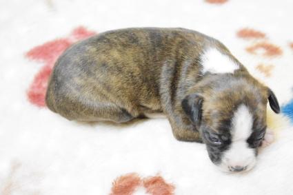ミックス犬の子犬No.201003195-2