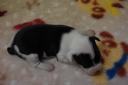 ミックス犬の子犬No.201003193-2