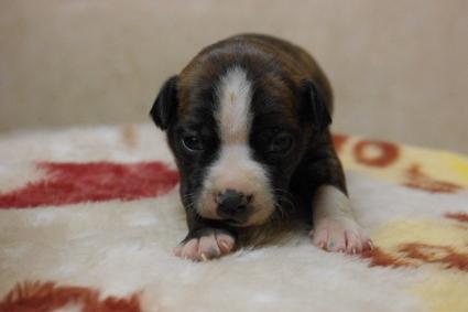 ミックス犬の子犬No.201003195